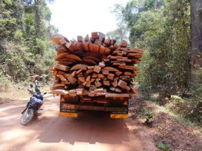 China's Appetite for Luxury Rosewood Fuels Illegal Timber Trade in Cambodia